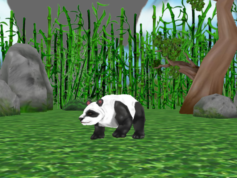 A giant panda in the forest.